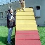 Dresaj Canin 10