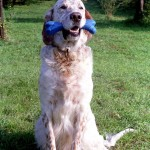 Dresaj Canin 11