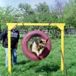 Dresaj Canin 12
