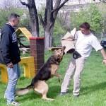 Dresaj Canin 18