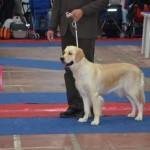 Campionatul European 2012 Bucuresti 02