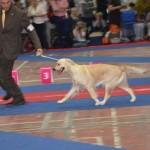 Campionatul European 2012 Bucuresti 11