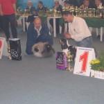 CACIB 2004 Bucuresti 1