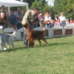 CACIB 2006 Bucuresti 14