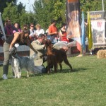 CACIB 2006 Bucuresti 16