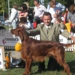 CACIB 2006 Bucuresti 17