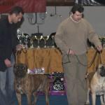 Dac Moloss 2006 Bucuresti 01