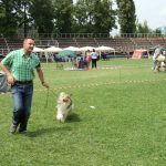 Collie Rough - Best of Breed, Grupa 1